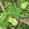 果実、種子で見分ける