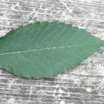 葉で見分ける